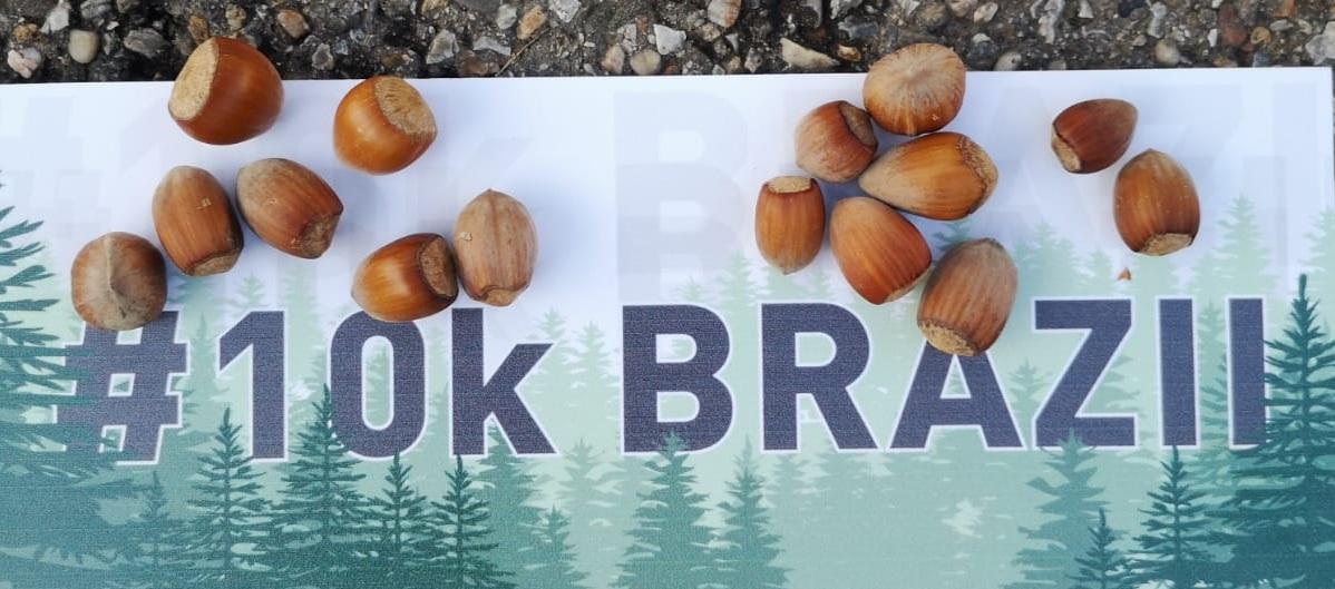 Studium Green si Beard Brothers propun un proiect inedit: 10kBRAZII. Fântâni de oxigen pentru sănătatea Clujului
